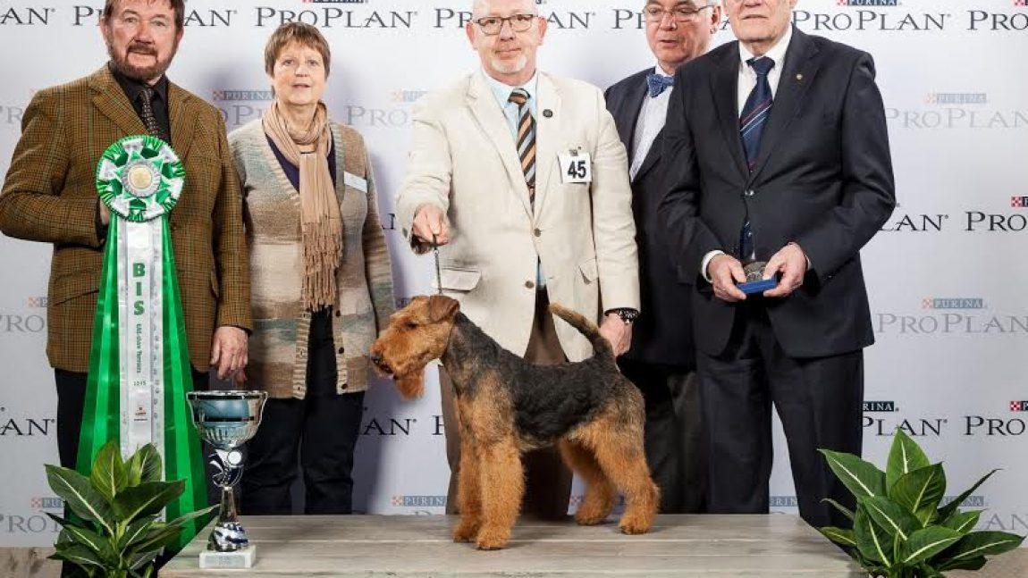 Terriershow