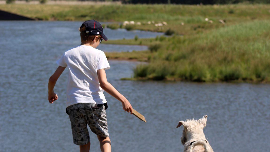 Definitief programma Jonge Hondendag