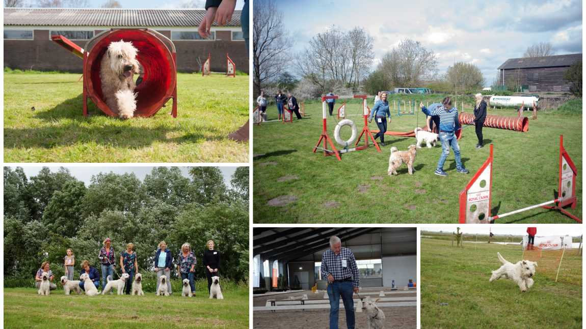 Jonge Honden- en Familiedag 2019